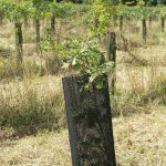 Climatic agroforest